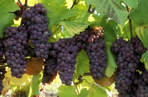 Area Wineries Asheville Vacation Rentals