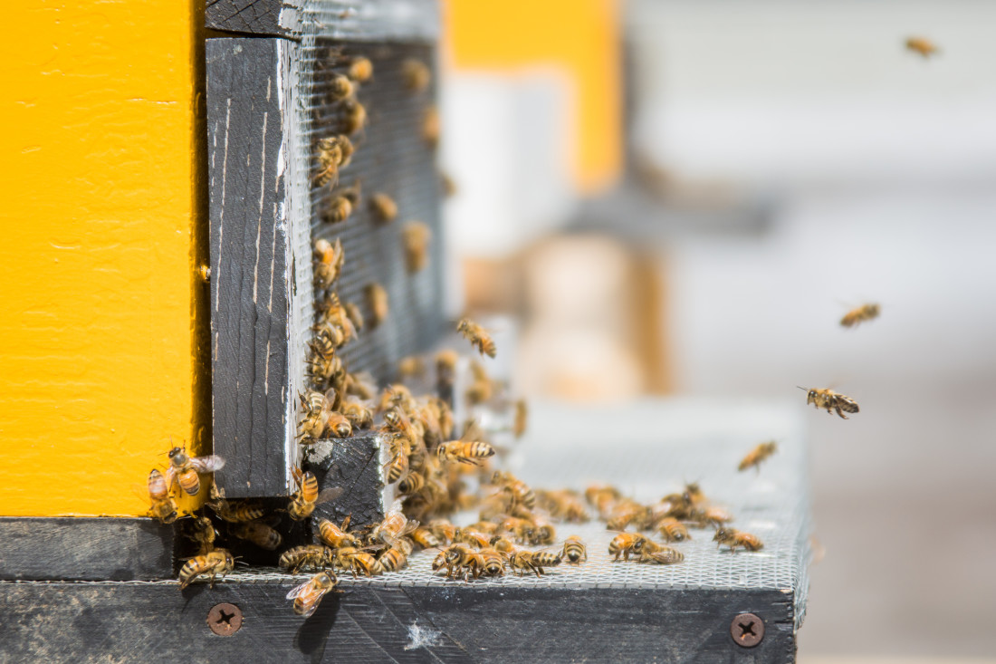 Pollinator Week with Bees on the Roof